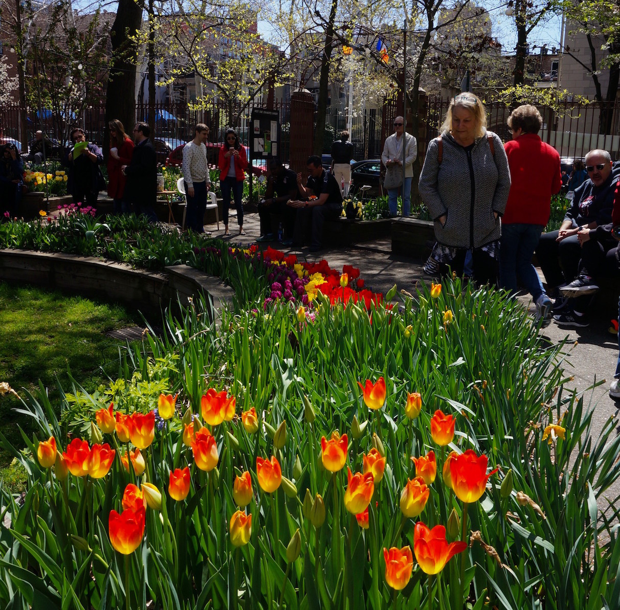 tulip-festival-nyc-west-side