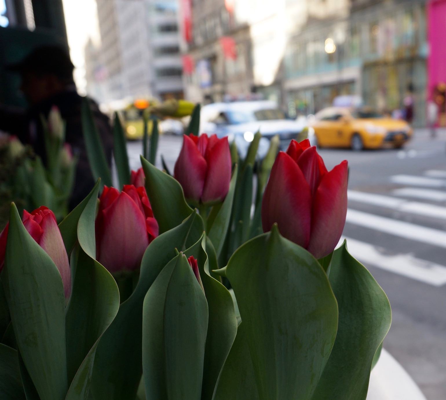 Stop And Snap The Roses Im Obsessed With Nyc Spring Flowers New
