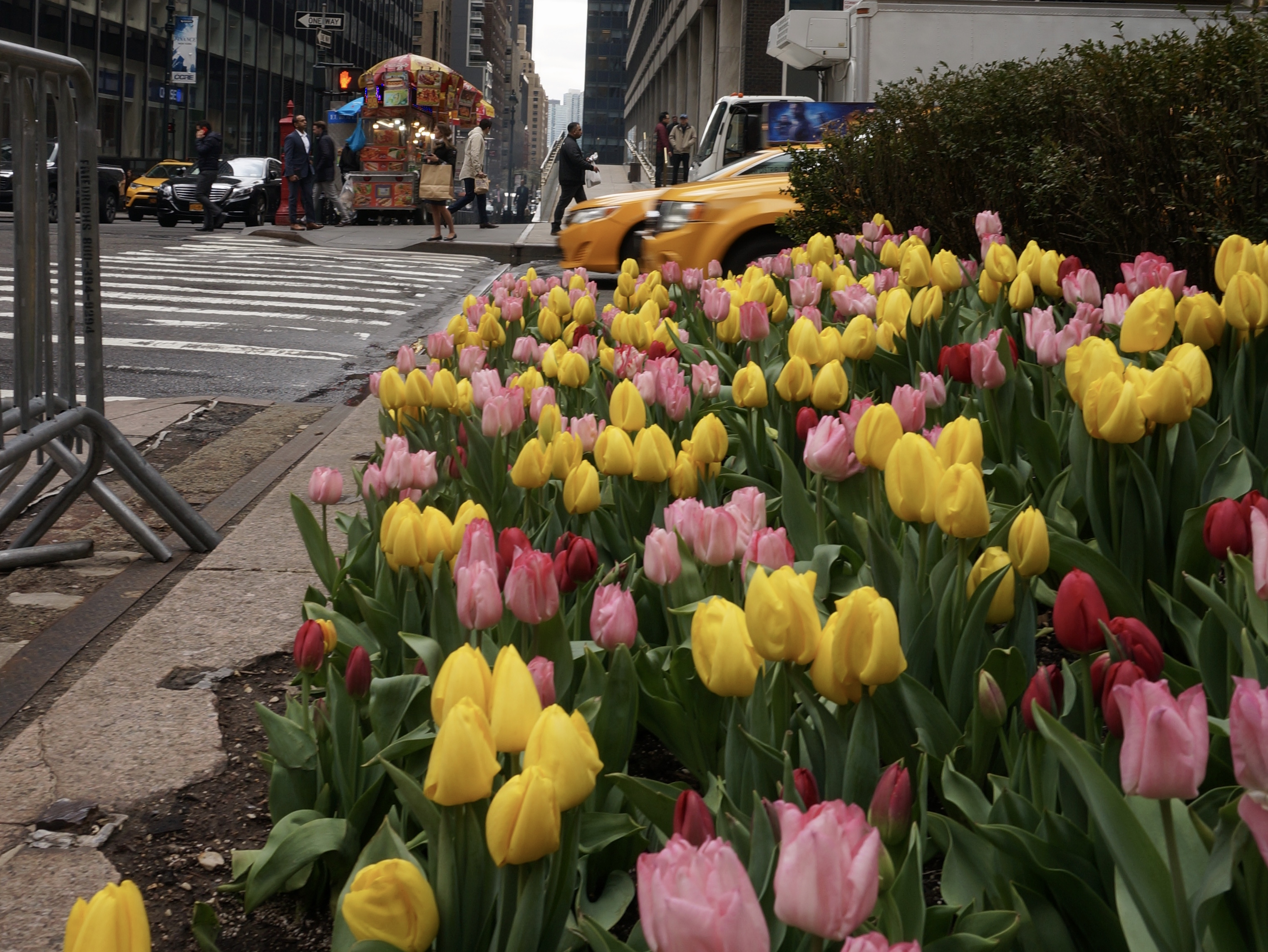 6 Places To Find The Prettiest Spring Flowers Nyc
